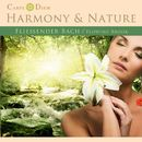Fliessender Bach - Flowing Brook/Harmony & Nature