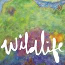 Wildlife/Headlights