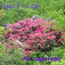 Am Lagerfeuer/Ingo F. & QK