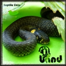 Reptile Chile/A Real Good Band