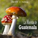 Ritmo Tipico: Guatemala/Las Marimbas de Guatemala