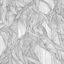 Roots/The Great Albatross