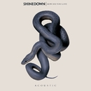 How Did You Love/Shinedown