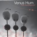 Pink Champagne/Venus Hum