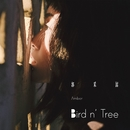 Bird N' Tree/Amber Kuo