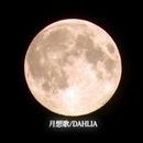 月想歌/DAHLIA/テラ小室P