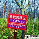 WILDLIFE PROTECTION AREA/VIOLETS