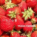 いちご白書/TRANS FARMER