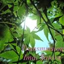Transmission/今井さとる