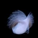 Feathermagnetik/KIRA KIRA