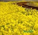 Beautiful Life(配信限定パッケージ)/Soulife