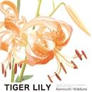 TIGER LILY/Kenmochi Hidefumi