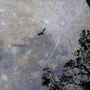 Oiseaux/Oiseau