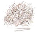 Uteruchesis/Marmalade butcher