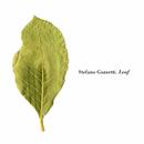 Leaf/Stefano Guzzetti