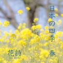 日本の四季 春/花詩