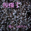 桜横丁/隼人(はやと)。