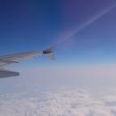 First Flight/Rose Osmanthus