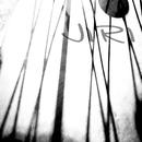 Life phenomena/JIRI