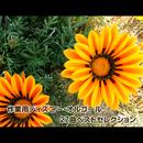 作業用ディズニー・オルゴール 27曲ベストセレクション/浜崎 vs 浜崎