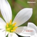 タマスダレと曼珠沙華(REMIX)/マタジュロー