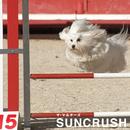 SUNCRUSH/ザ・マルチーズ