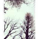 SNOW TREE/佐藤礼央