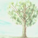 大きな樹/吉武真理