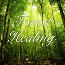 Forest Healing ~森のシンフォニー~ (Lite Edition)/魔界Symphony