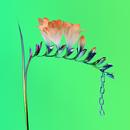 Skin Companion EP I/Flume