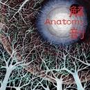 解剖/Anatomy