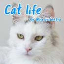 Cat life (吹奏楽版)/GT-K