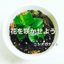 花を咲かせよう/ニシオカナヲト