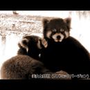 美女と野獣 (リズミックバージョン)/浜崎 vs 浜崎