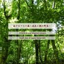 南アルプスの森 ~渓流と朝の野鳥~ (自然音)/Star Cabin-Project