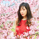 桜道 ~Episode.1別れ~/MIAKA