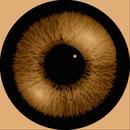 Eyes/Keiichi matsukawa