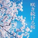 咲き続ける桜/VOVO☆鉄平