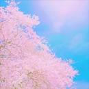 桜風/Naomi