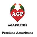 Persiana Americana/Agapornis