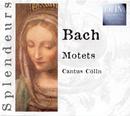 Bach: Motets/Cantus Cölln