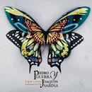 14 de Ciento Volando de 14/Pedro Guerra