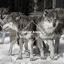Never Know (Few Wolves VIP remix) feat.Freja Kirk/Few Wolves