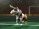Lied der Deutschen (Video)/The Dog