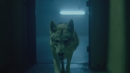 Wolfpack (Official Video)/TALA & Banks