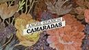 Camaradas (Lyric Video)/Angel Stanich