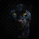Stilen Lagt feat.Benny Jamz,Gilli,MellemFingaMuzik/Molo
