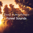 Forest Sounds (Sleep & Mindfulness)/Sleepy Times