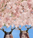 お花見ビーナス/the do-nuts
