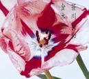 金木犀/笑/笹川美和